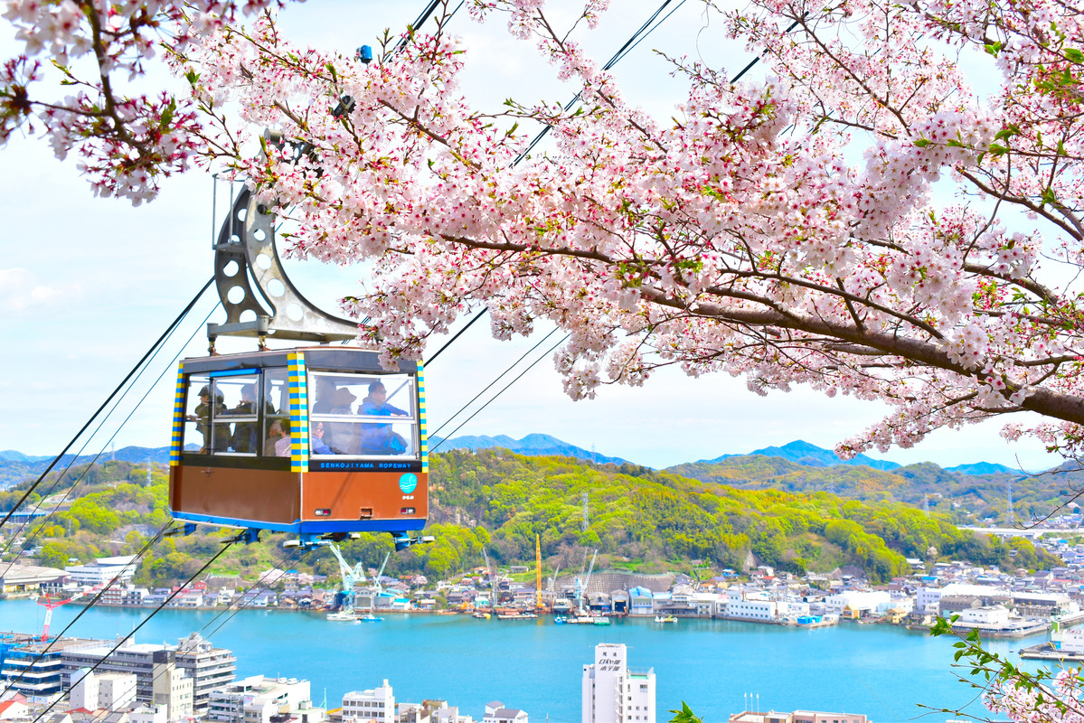 千光寺公園 桜